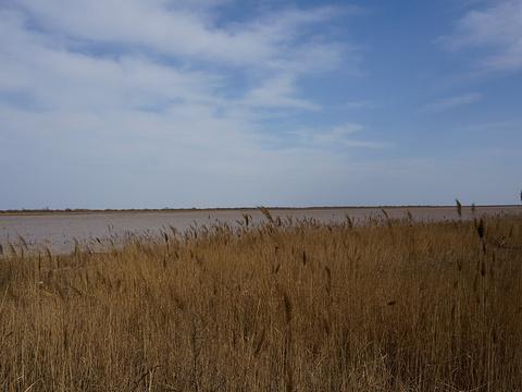 黄河口生态旅游区旅游景点图片