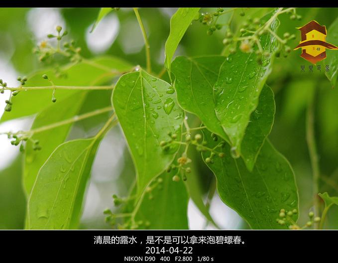雨中的苏州图片