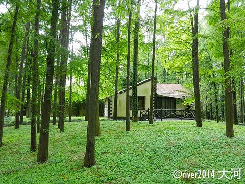 共青国家森林公园旅游景点图片