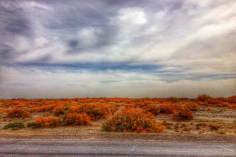 金塔沙漠森林公园旅游景点攻略图