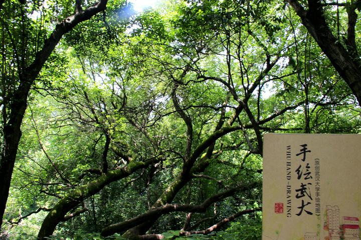 """""""对于武汉大学来说最美的时候应该就是3月初到4月樱花开放的时候,但是不得不说的就是那个时候确实是..._武汉大学""""的评论图片"""