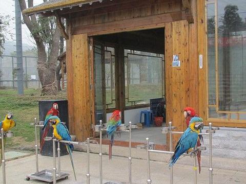 穹窿山万鸟园旅游景点图片