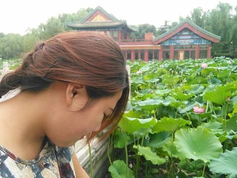 龙潭湖公园旅游景点攻略图