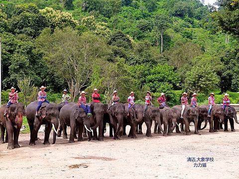 清道大象训练中心旅游景点图片