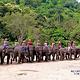清道大象训练中心