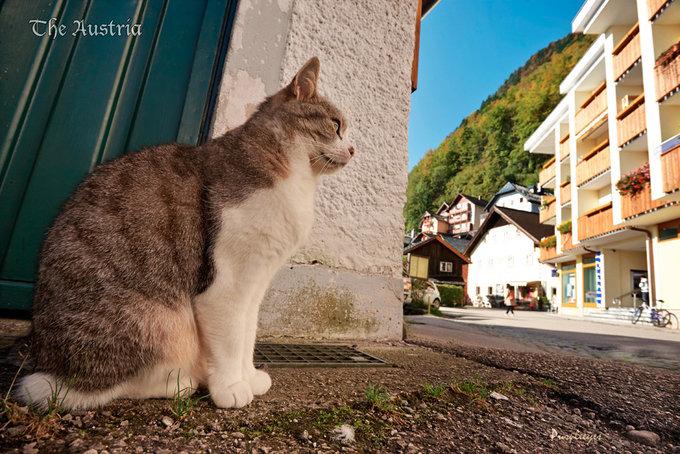 小镇动物图片