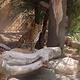 阿联酋公园动物园