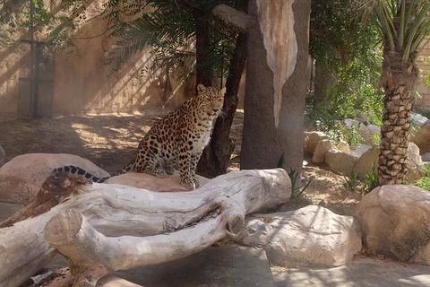阿联酋公园动物园的图片