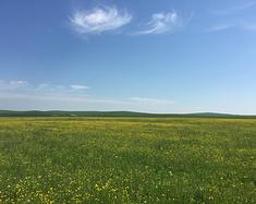 梦中的草原——呼伦贝尔