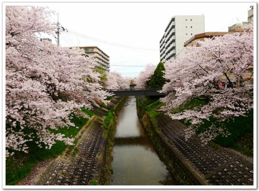 樱花盛开时节、还不快来日本(下)