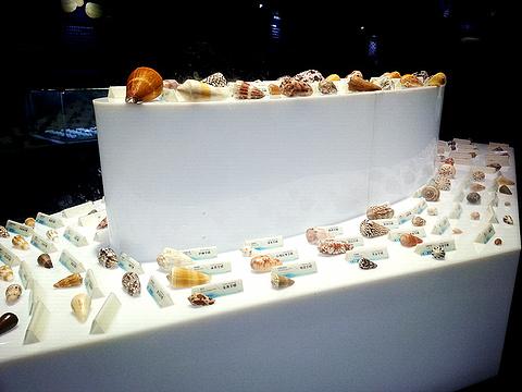 贝壳梦幻世界的图片