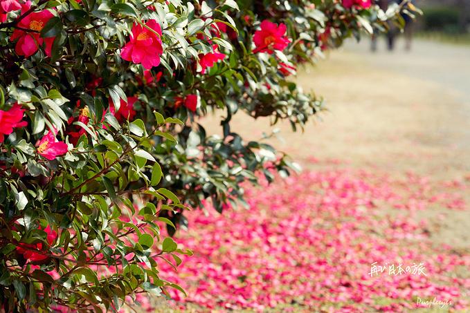 滨离宫恩赐庭园图片
