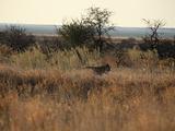 津巴布韦旅游景点攻略图片