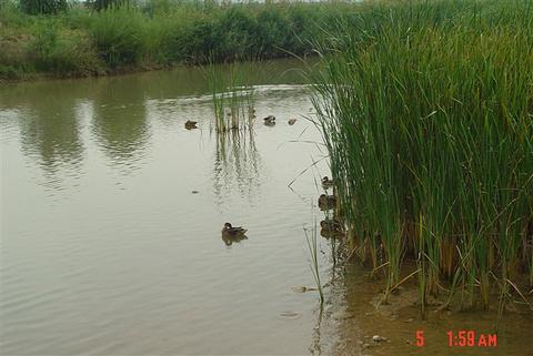 银滩湿地公园旅游景点攻略图