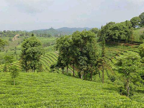 中华普洱茶博览苑旅游景点图片