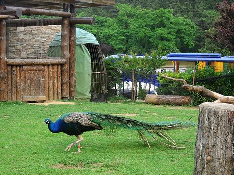 鸟语林旅游景点攻略图