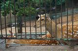 青岛动物园