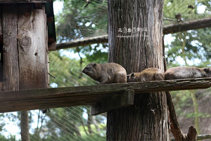 David Sheldrick Wildlife Trust图片