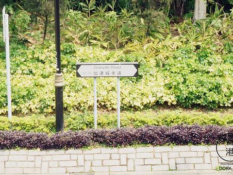 加连威老道旅游景点图片