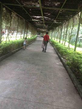 茂名森林公园旅游景点攻略图