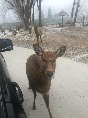 """""""我们出行的天气不是很好,有雾还伴有小雪,所以已经做好了看不到太多动物的准备,达到野生动物,统一..._北京野生动物园""""的评论图片"""