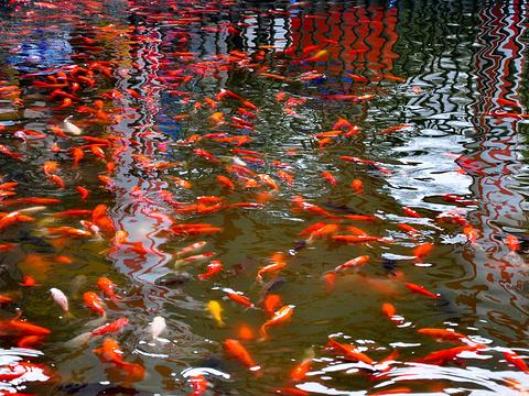成都动物园旅游景点图片