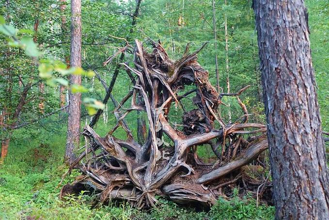 敖鲁古雅使鹿部落景区图片