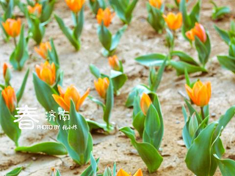 济南植物园旅游景点图片