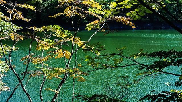 #春之女神#声与影中的深爱北国の秋