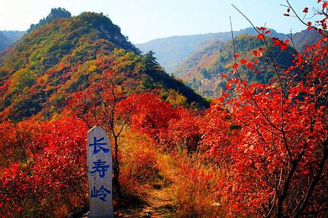 仙台山的图片