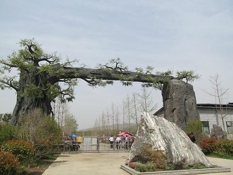 禹州森林植物园旅游景点攻略图