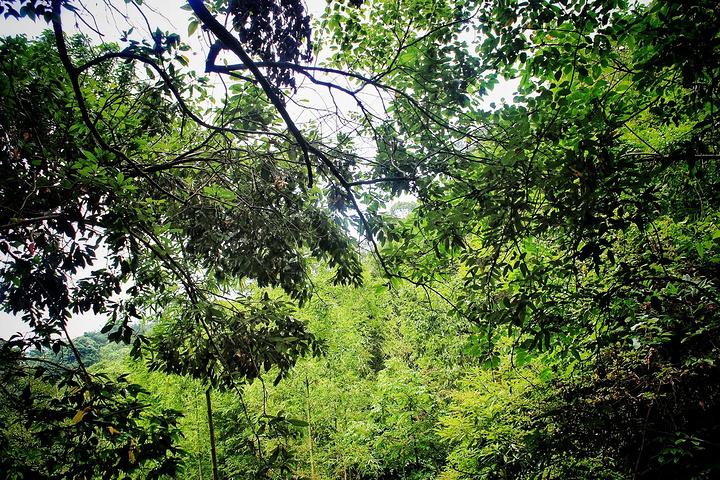 """""""这里拥有千岛湖最好的森林植被(国家亚热带原始次森林保护区)、最美的自然风光(森林、瀑布、彩岩)..._千岛湖森林氧吧""""的评论图片"""