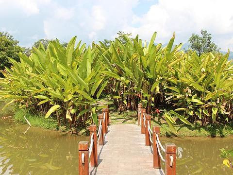 西双版纳雨林谷旅游景点图片