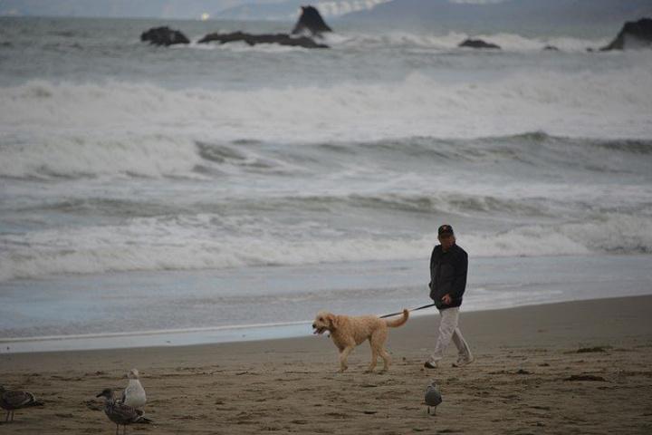 """""""半月湾(Half Moon Bay), 坐落在加洲旧金山南面大约30英里的地方, 这里不仅风景..._半月湾""""的评论图片"""