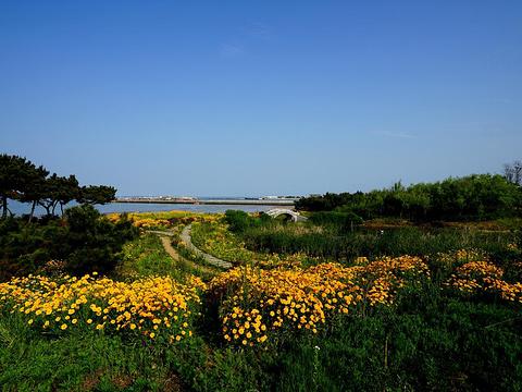 桃花岛风情园旅游景点图片