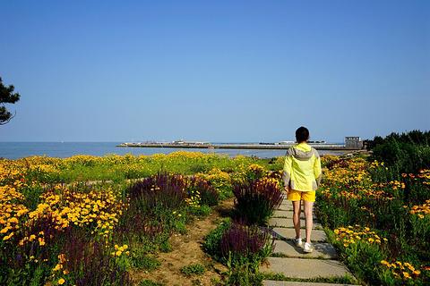 桃花岛风情园旅游景点攻略图