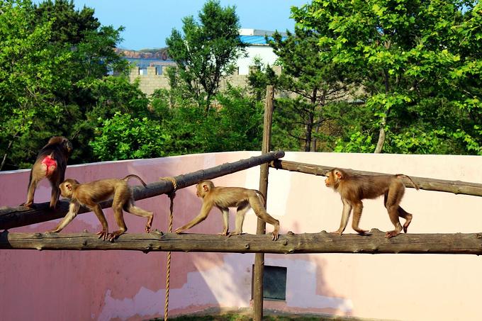 神雕山野生动物园图片