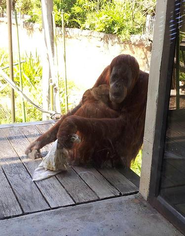 """""""动物基本都是放养的,还有澳大利亚特有动物考拉_墨尔本动物园""""的评论图片"""