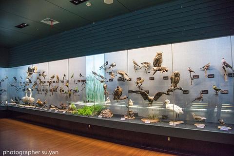 昆明市博物馆的图片