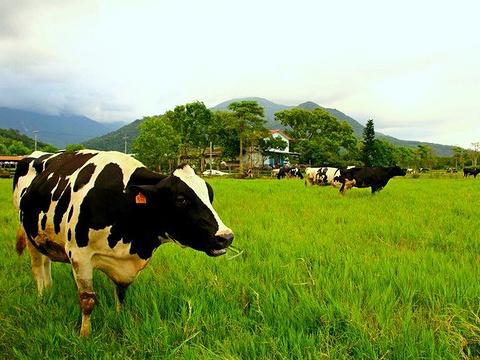 瑞穗牧场旅游景点图片