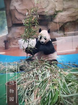 成都动物园的图片