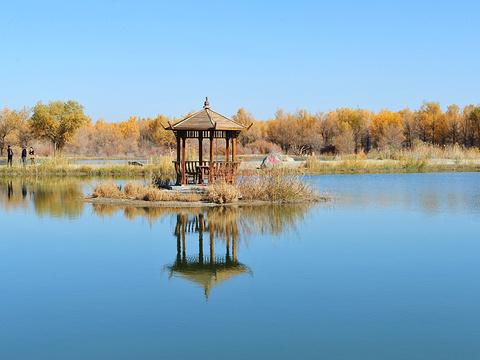 金塔胡杨林旅游景点图片