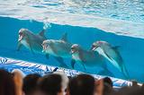 冲绳海洋博物会纪念公园