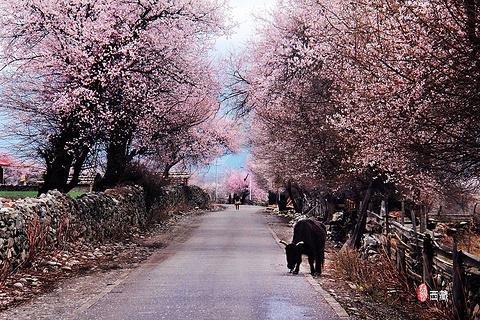 桃花沟风景区旅游景点攻略图
