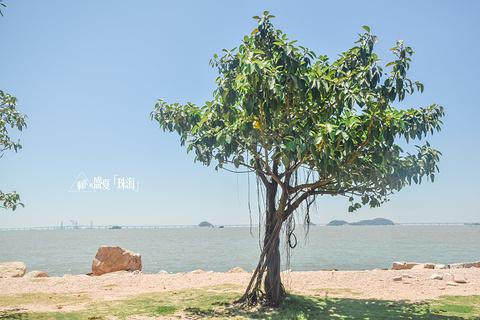 野狸岛的图片