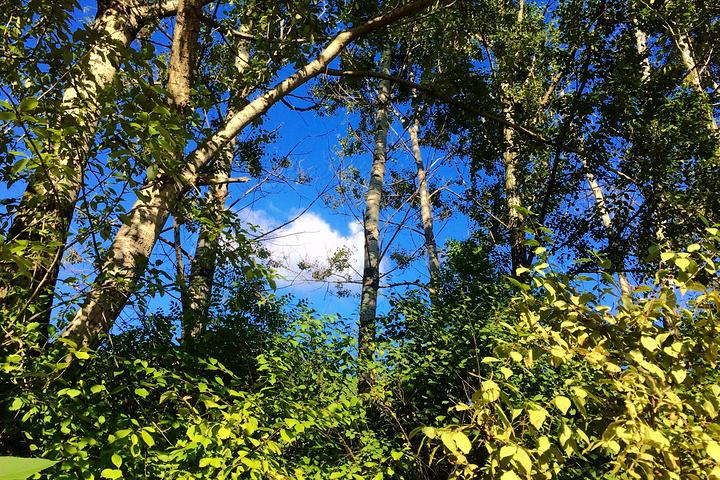 2018伊春兴安森林公园,门票免费,山门据山顶兴安塔8公里,徒步或