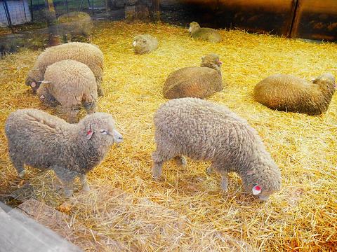 羊之丘展望台旅游景点图片