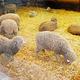 羊之丘展望台
