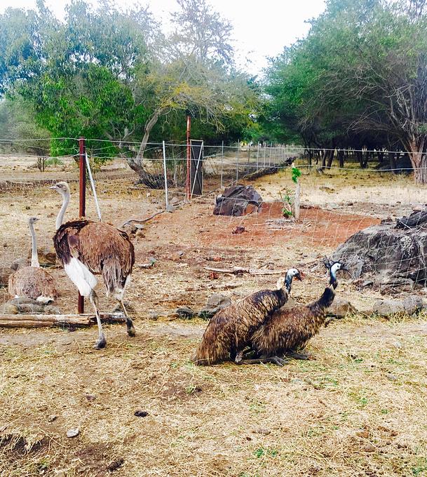 卡塞拉自然公园图片