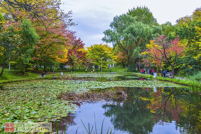 北海道大学图片